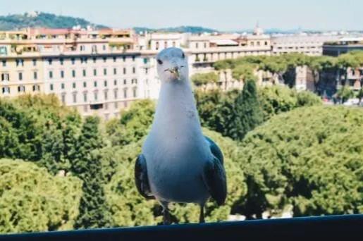 Rome22