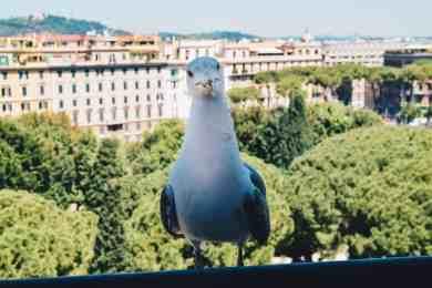 DSC 0257 - Leukste Rome tips voor je stedentrip: 15 mooiste bezienswaardigheden!