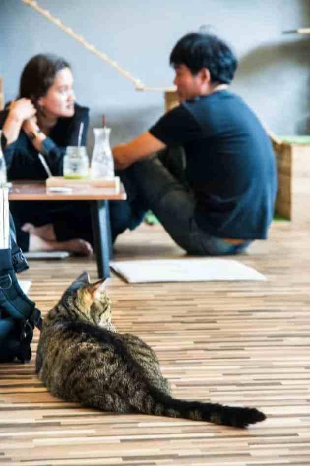 KittyCatCaféBangkok8