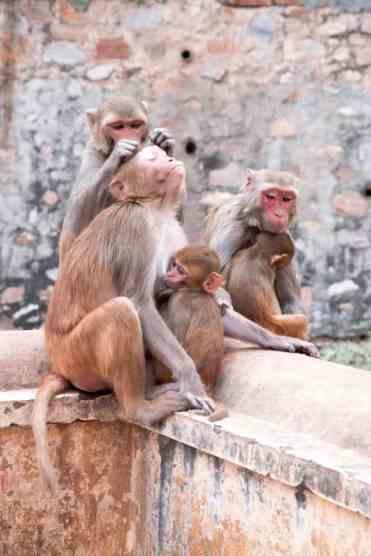Monkeytemple14