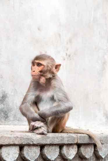 Monkeytemple31
