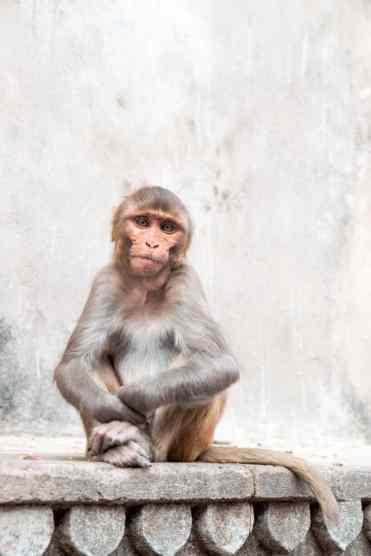 Monkeytemple32 1 - Deze foto's zorgen ervoor dat India bovenaan je bucketlist komt!