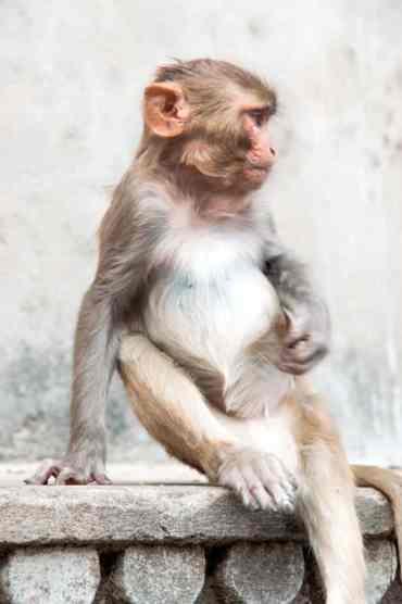 Monkeytemple37 - De monkey temple bezoeken in Jaipur: een aanrader of niet?