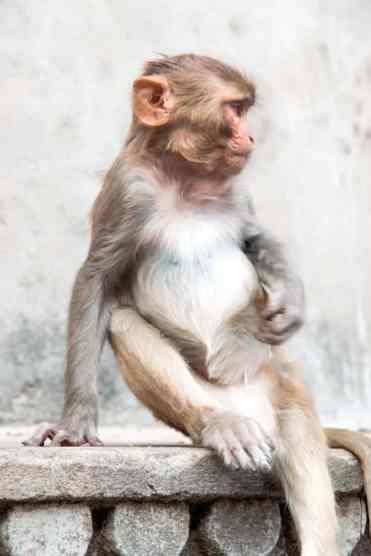 Monkeytemple37