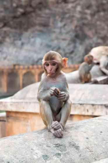 Monkeytemple39 - De monkey temple bezoeken in Jaipur: een aanrader of niet?