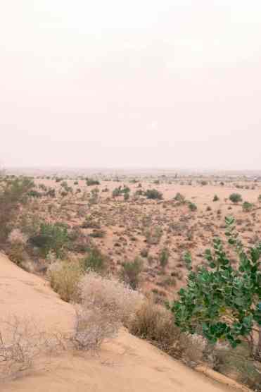 CamelSafariJaisalmer14 - Deze foto's zorgen ervoor dat India bovenaan je bucketlist komt!