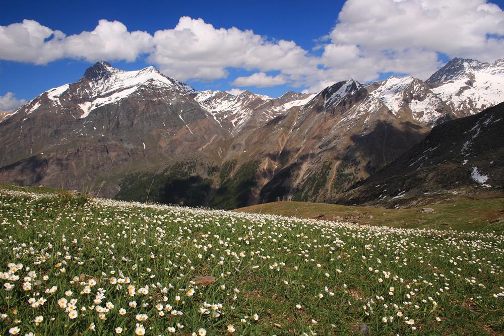 Paesaggio di montagna  Silvia Ghidotti  Expo