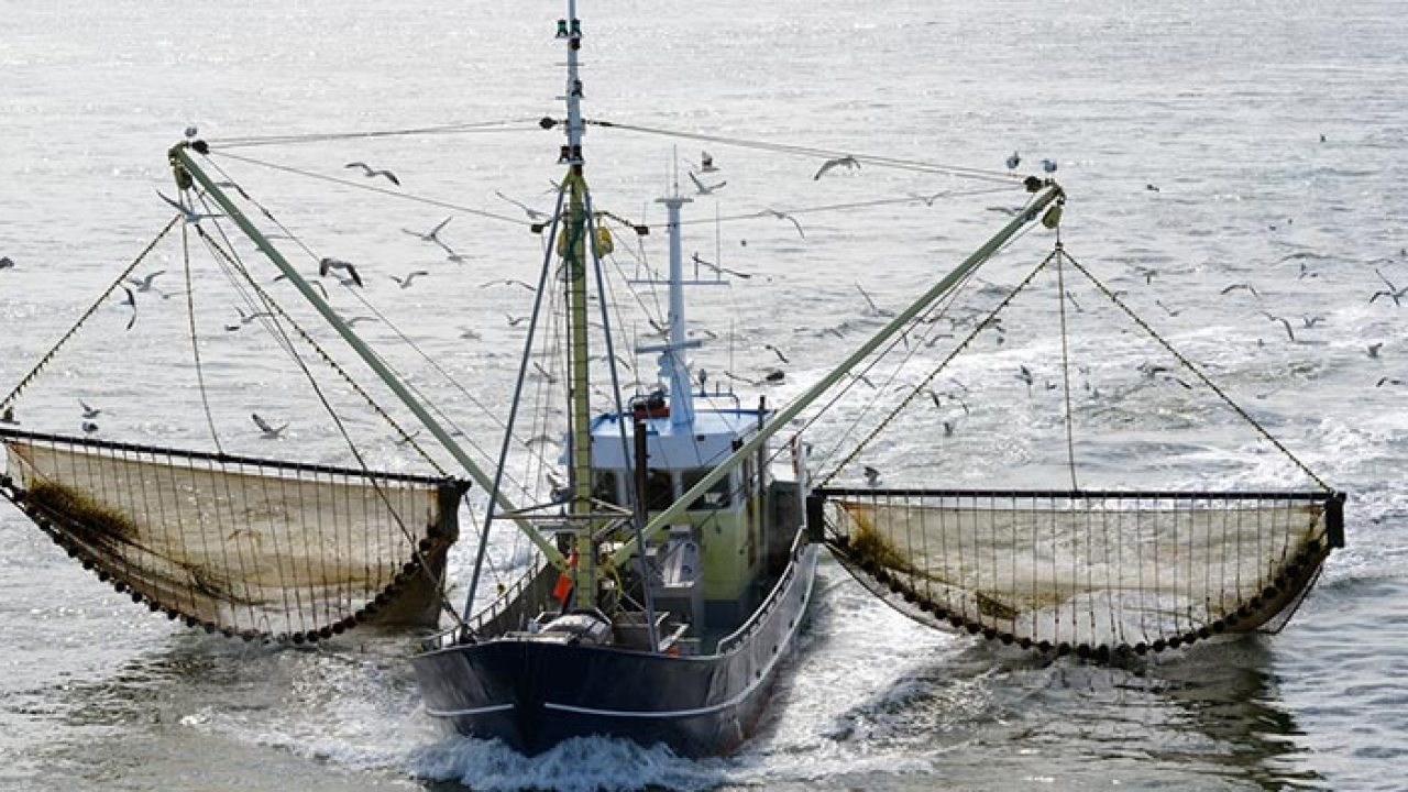 pesca elettrica in mare