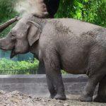 La elefanta Mara llega a su nuevo hogar, un santuario en Brasil, después de 50 años en circos y zoológicos