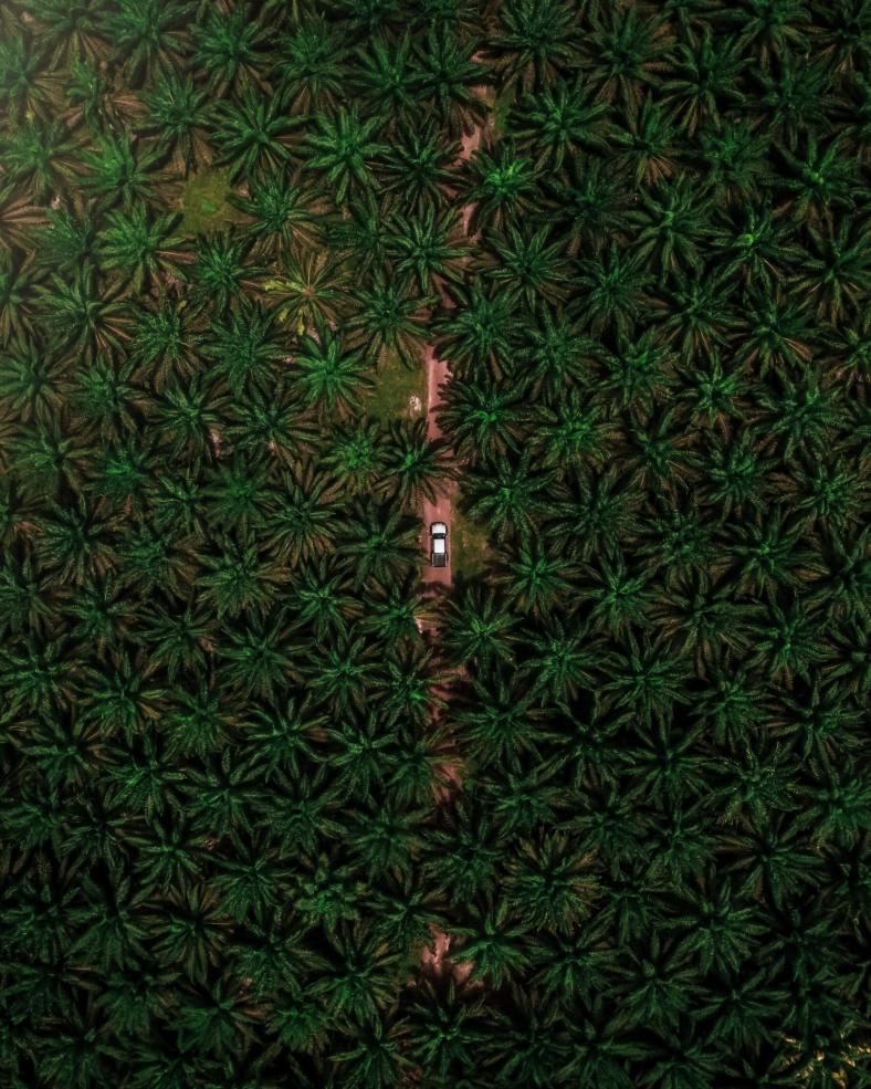 palm oil plantation SE Asia