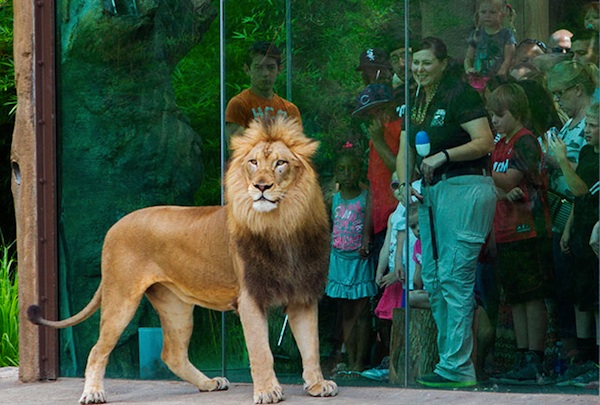Get an up-close look at wild creatures in natural settings at America's top animal parks