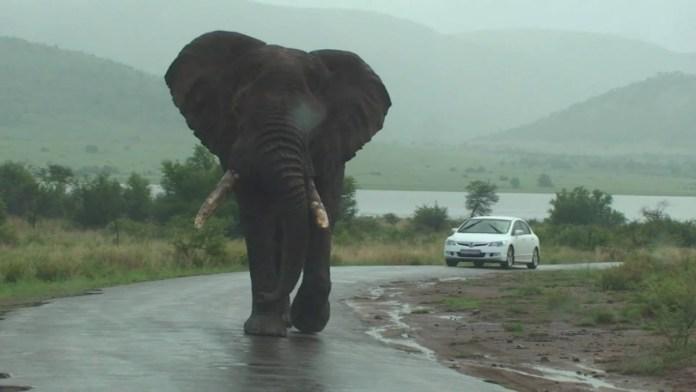 Biggest animals In The World