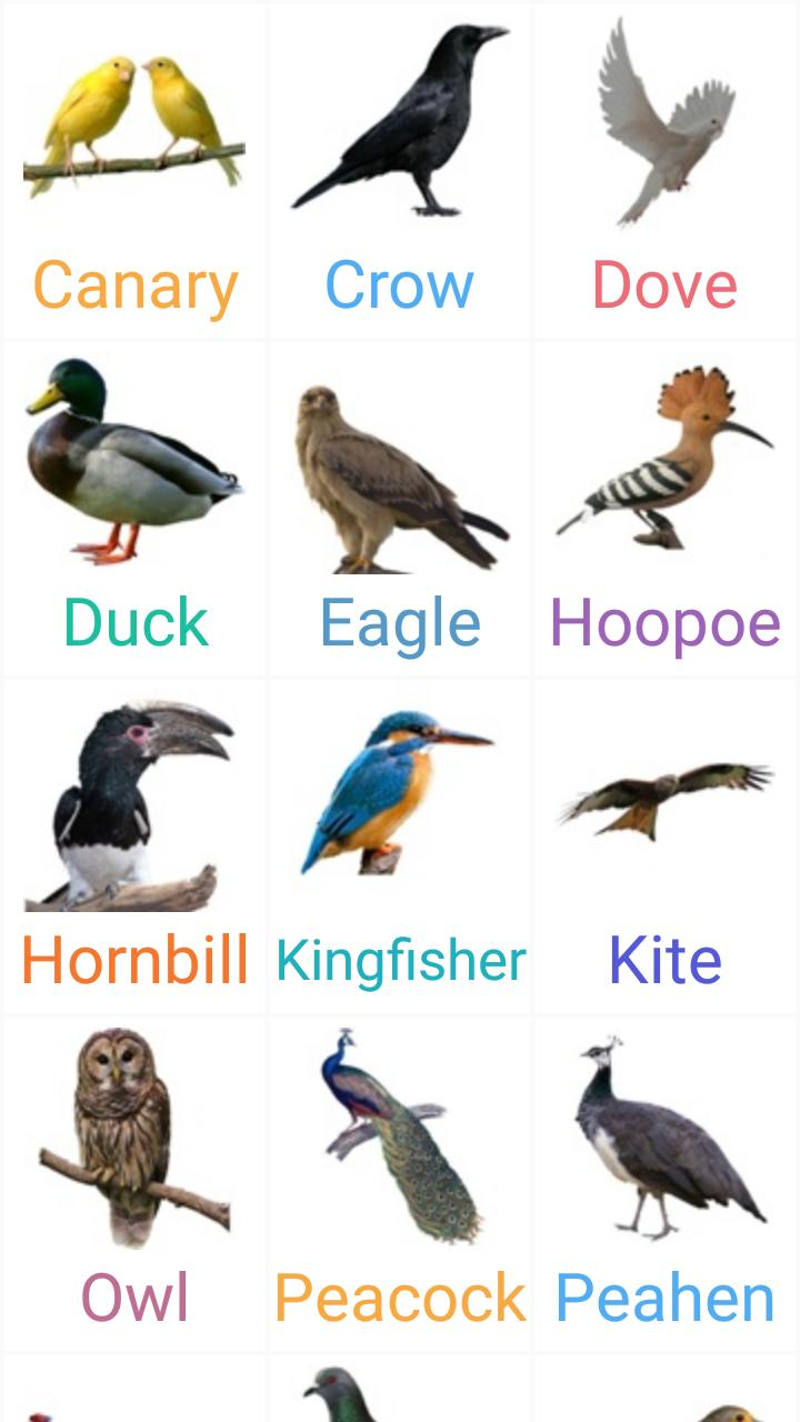 names of birds