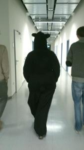 Der Bär in der Zeitung