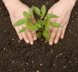 plantar arbol