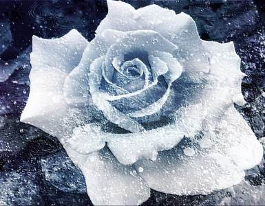 Haiku: a frozen flower | Expressing Life