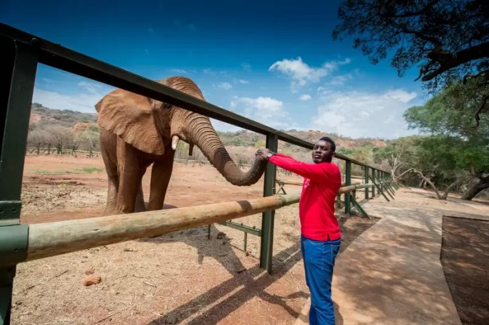ay-feeding-the-elephants-at-the-monkey-and-elephant-sanctuary-a-mere-45-minutes-drive-from-sandton-800x532