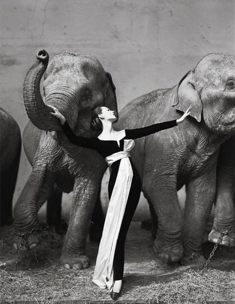 Dovima with Elephants by Avedon on Exshoesme.com