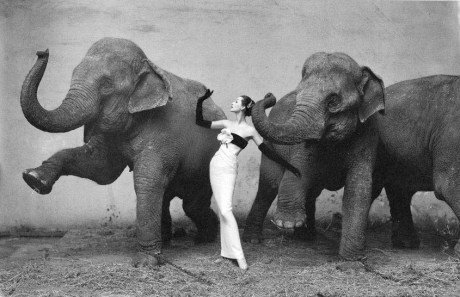 Dovima with Elephants by Richard Avedon on Exshoesme.com