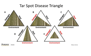 Figure 1. Tar spot disease triangle showing how A. the pathogen, host and environment can influence the amount of disease that may develop in crop canopy. B. Reduced disease potential if initial pathogen inoculum is decreased in a field. C. Reduced disease potential if host plant has improved resistance to the pathogen. D. Reduced disease risk if environmental conditions are not favorable for disease development. E. Reduced disease risk if all three factors are minimized.