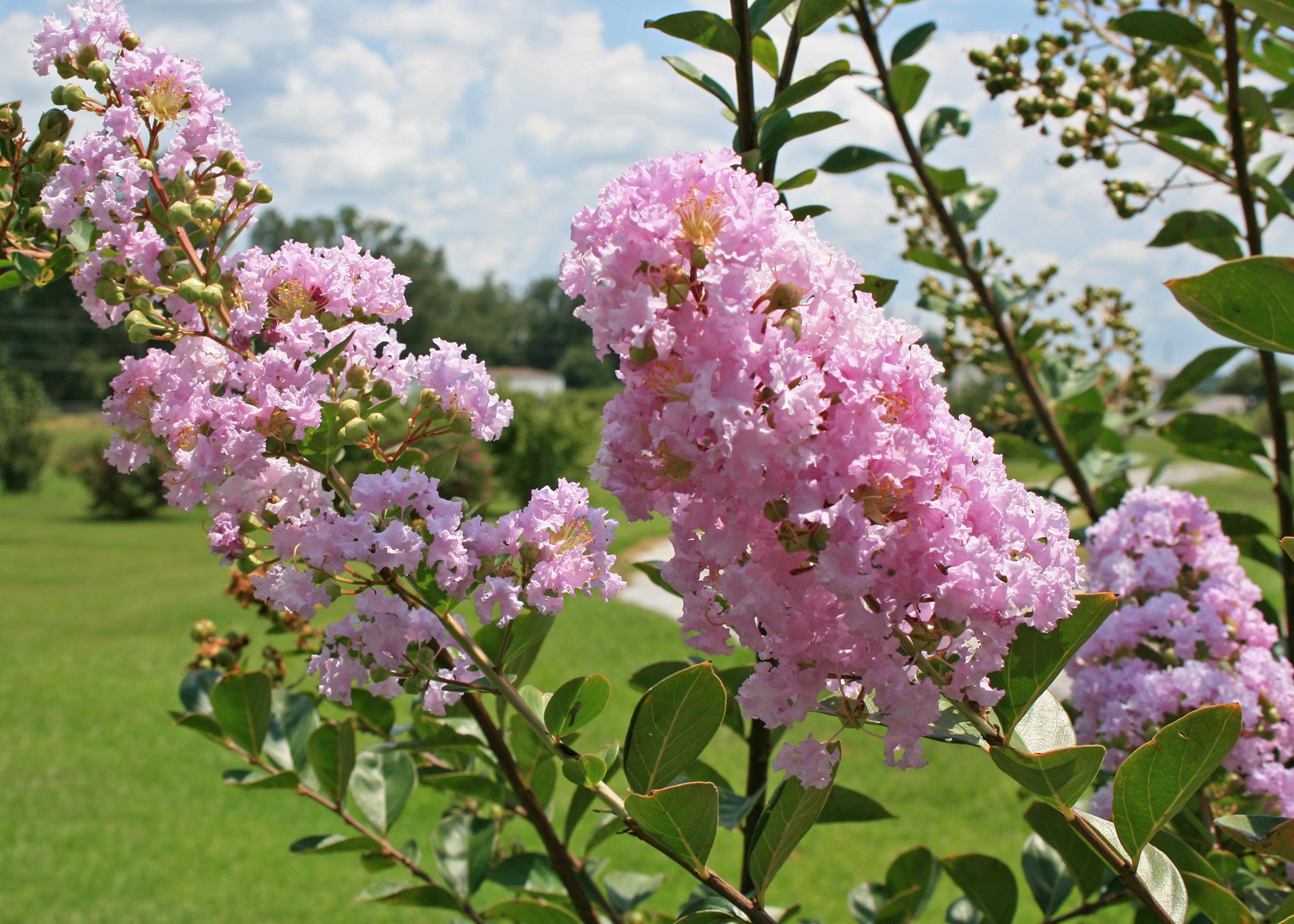 correct pruning garden plants