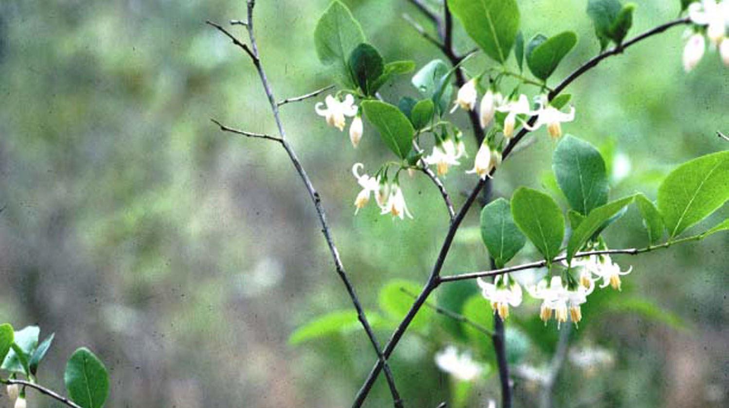 Bean Plants Types Bush