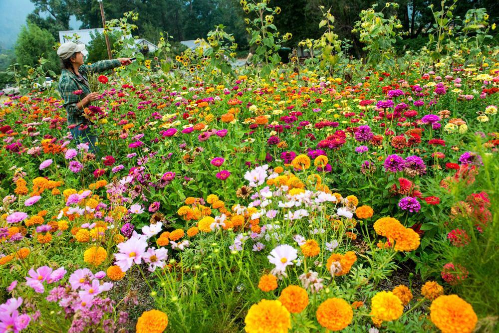 flowers shrubs and trees osu