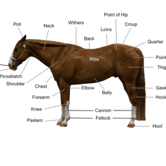 Horse Muscle And Bone Diagram Deh P5000ub Wiring Conformation Of The That Points To Location Different Body Parts Including Poll Neck