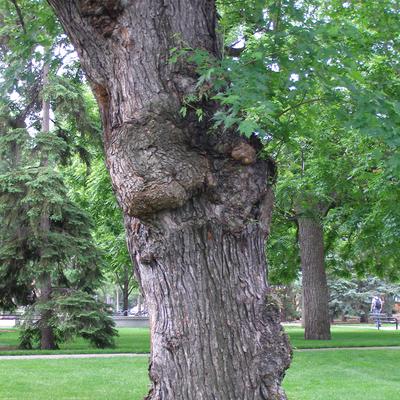 non harmful tree conditions