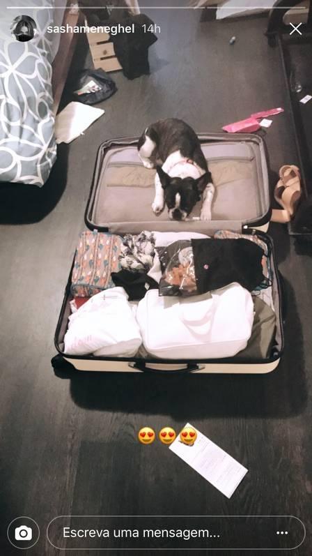 Sasha arruma malas da viagem