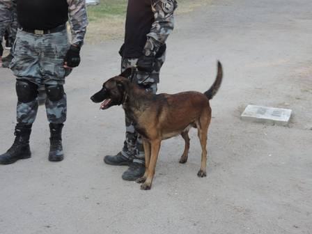 Um cachorro da PM também participou da vistoria