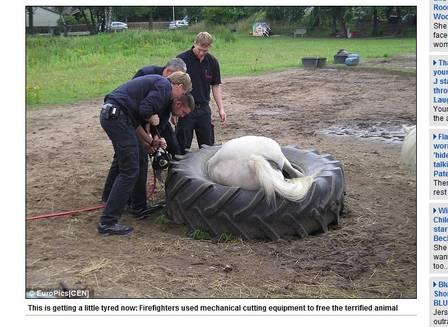Bombeiros usaram chave hidráulica para cortar o pneu e libertar pônei
