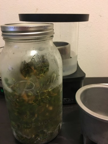 Cannabis soaking in 95% ethanol