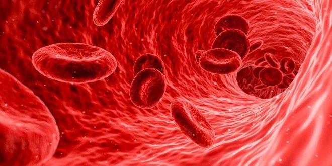 Uusi vasta-ainelääke parantaa suonten toimintaa valtimonkovettumataudissa