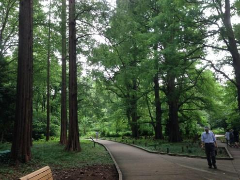 The dense forest of the Shinjuku Gardens.