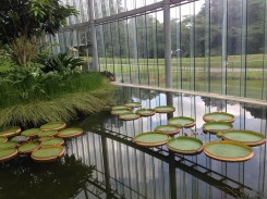 I loved the reflection surrounding the water lilies.