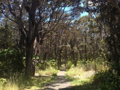 The growing forest surrounding the trail.