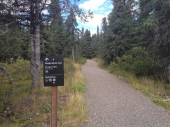 Starting our hike inside Denali National Park with the Savage Alpine Trail.