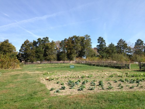 More vegetable gardens and an orchard.