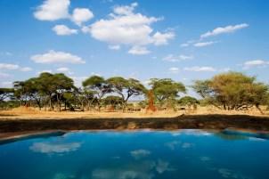 Pool at Swala Tarangire