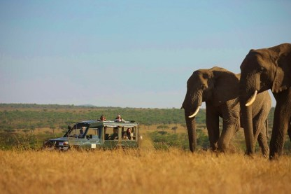 Game drive at Kicheche Valley Camp