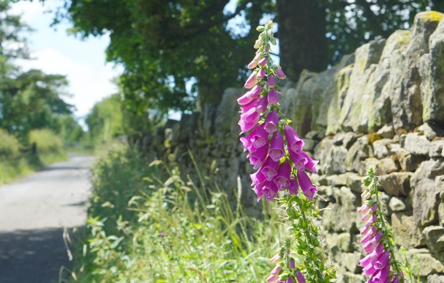 Flowers on a country road in Lancashire, a fun week extraordinarychaos.com