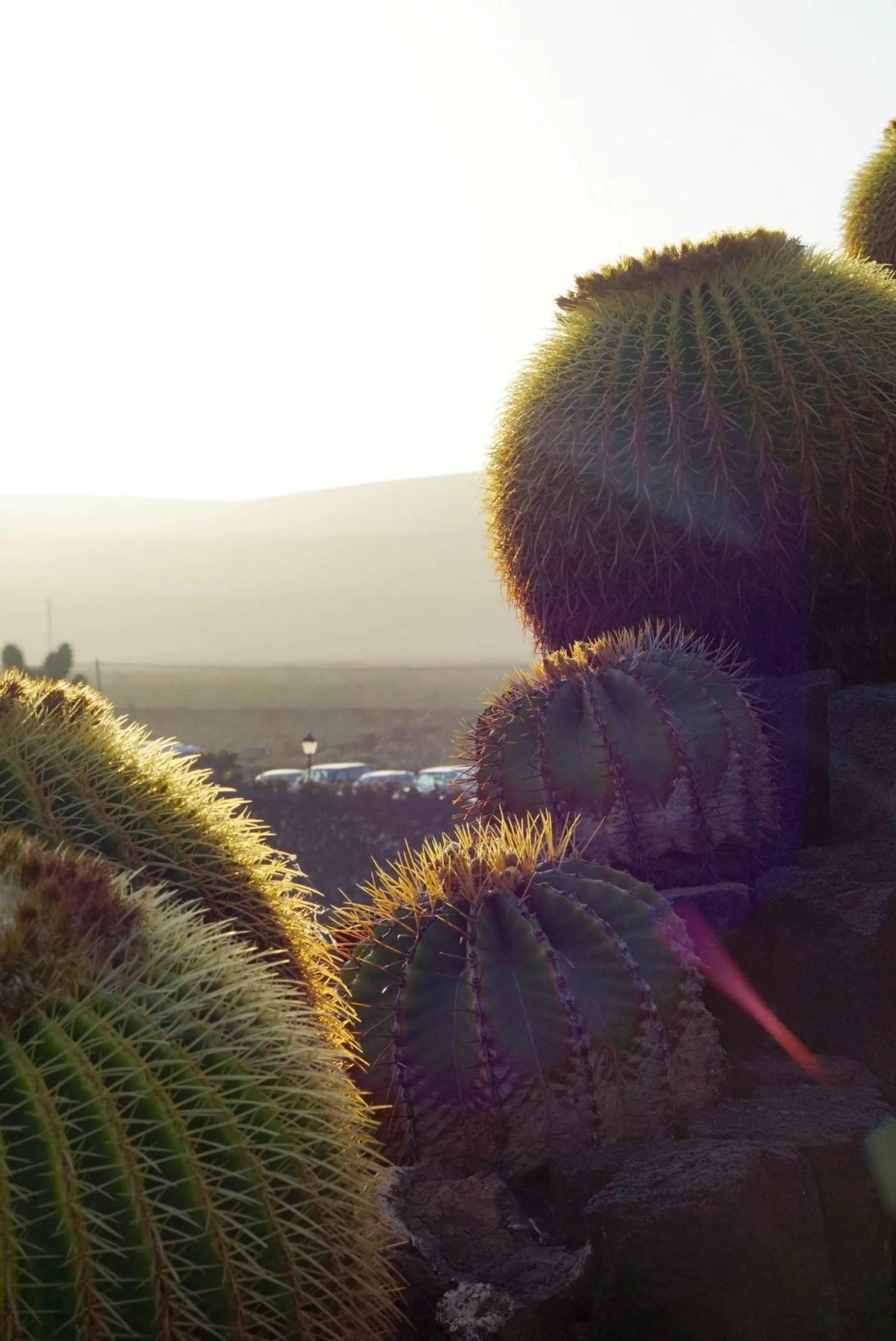 Cactus Garden Lanzarote at Dusk