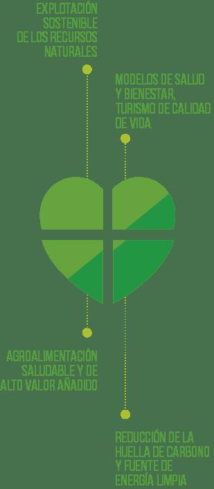 corazon-cuatro-sectores
