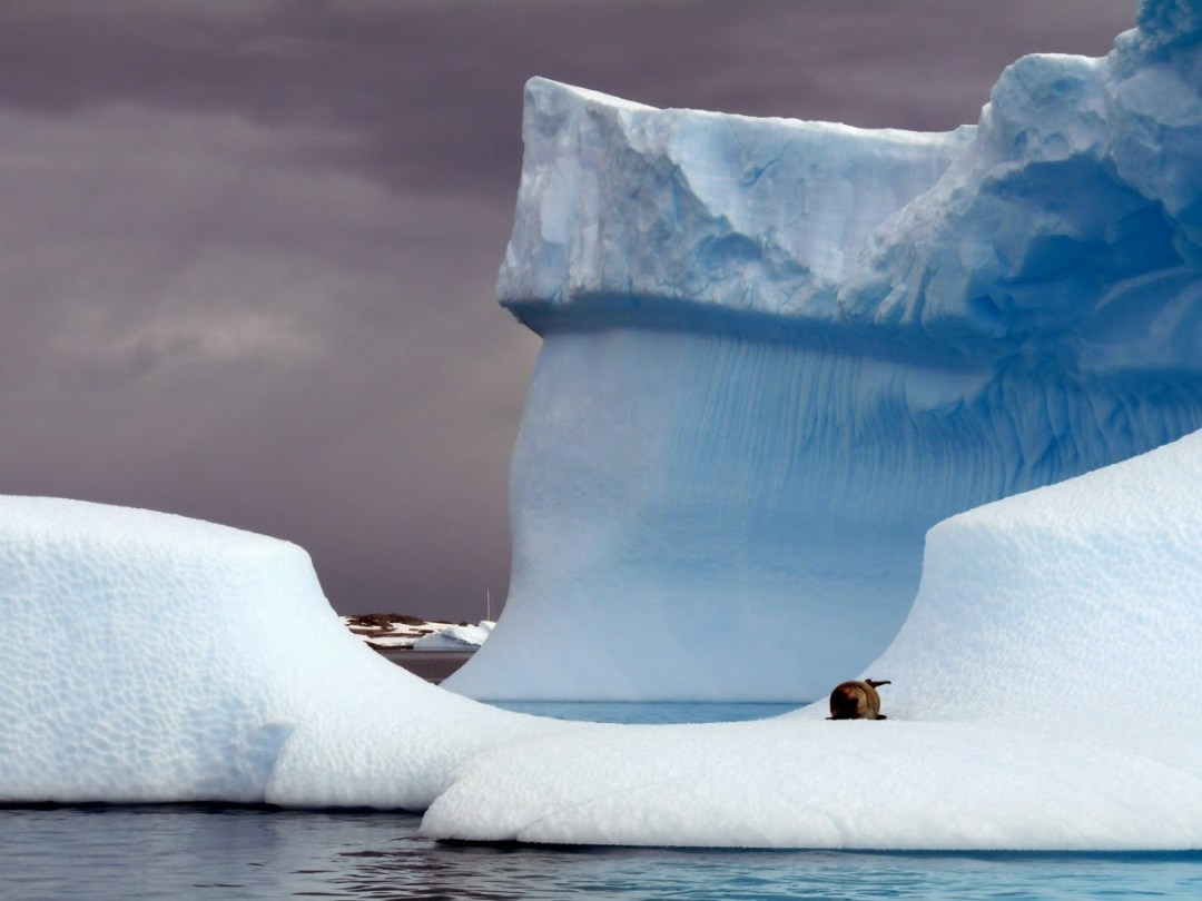 This lone seal on this fantastic iceberg makes for a surreal picture.