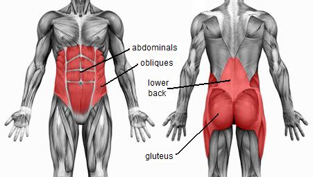 core muscles of the abdomen and lower back