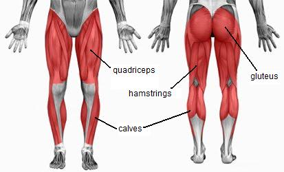 Quadriceps and Hamstring Exercises | Extreme Basketball Skills
