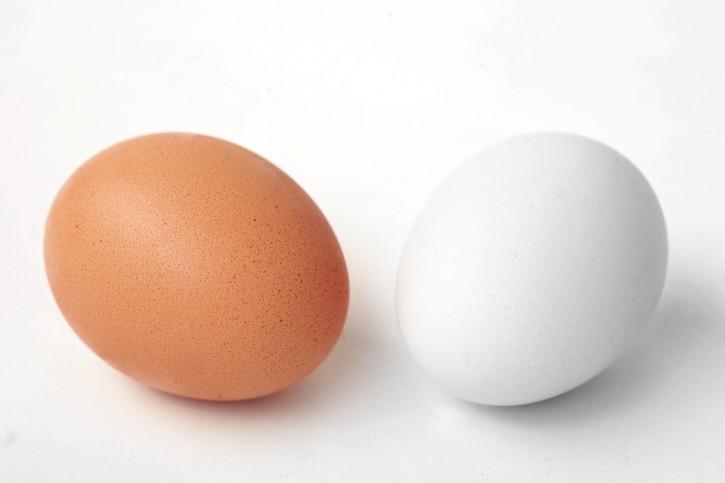 brown_white_egg