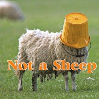 Status - Not a Sheep