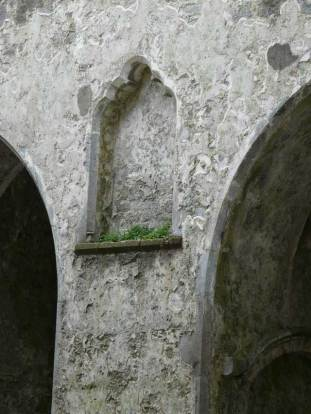 Hore Abbey, Clonmel, Ireland - spontaneous garden in the wall.